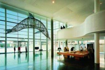 Dolfijn kunstwerk Chiarenza Centre Céramique